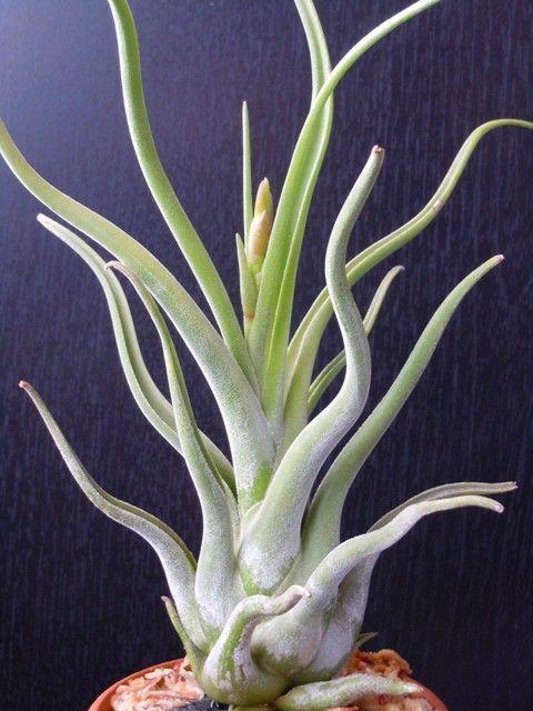 magic grow cactus instructions