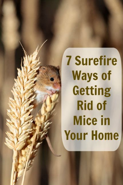 et pest control instructions