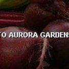 black beauty zucchini planting instructions