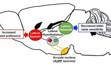 neurobiology of disease instructions for authors
